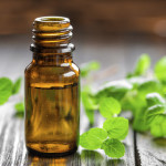 Researchers Look to Essential Oils to Create Antibacterial Treatment