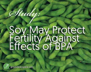 Soy May Protect Fertility Against Effects of BPA