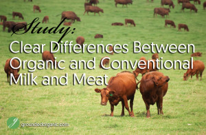 Study Finds Clear Differences Between Organic and Conventional Meat and Milk