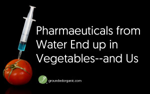 Pharmaeuticals from Water Ends Up in Vegetables–and Us