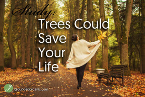 Study: Trees Could Save Your Life
