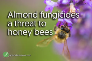 Almond fungicides a threat to honey bees